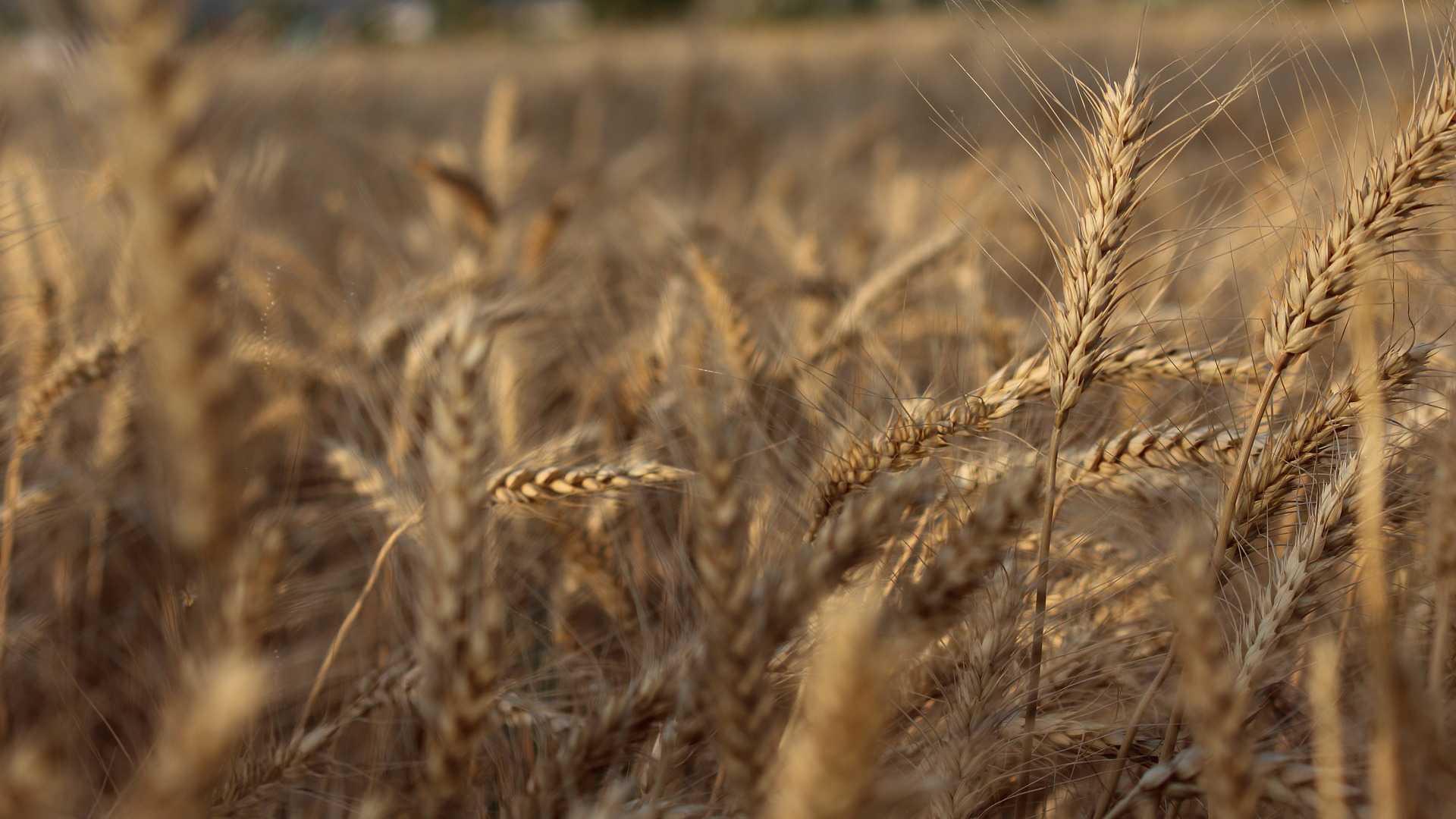 Weersverzekering voor landbouwers