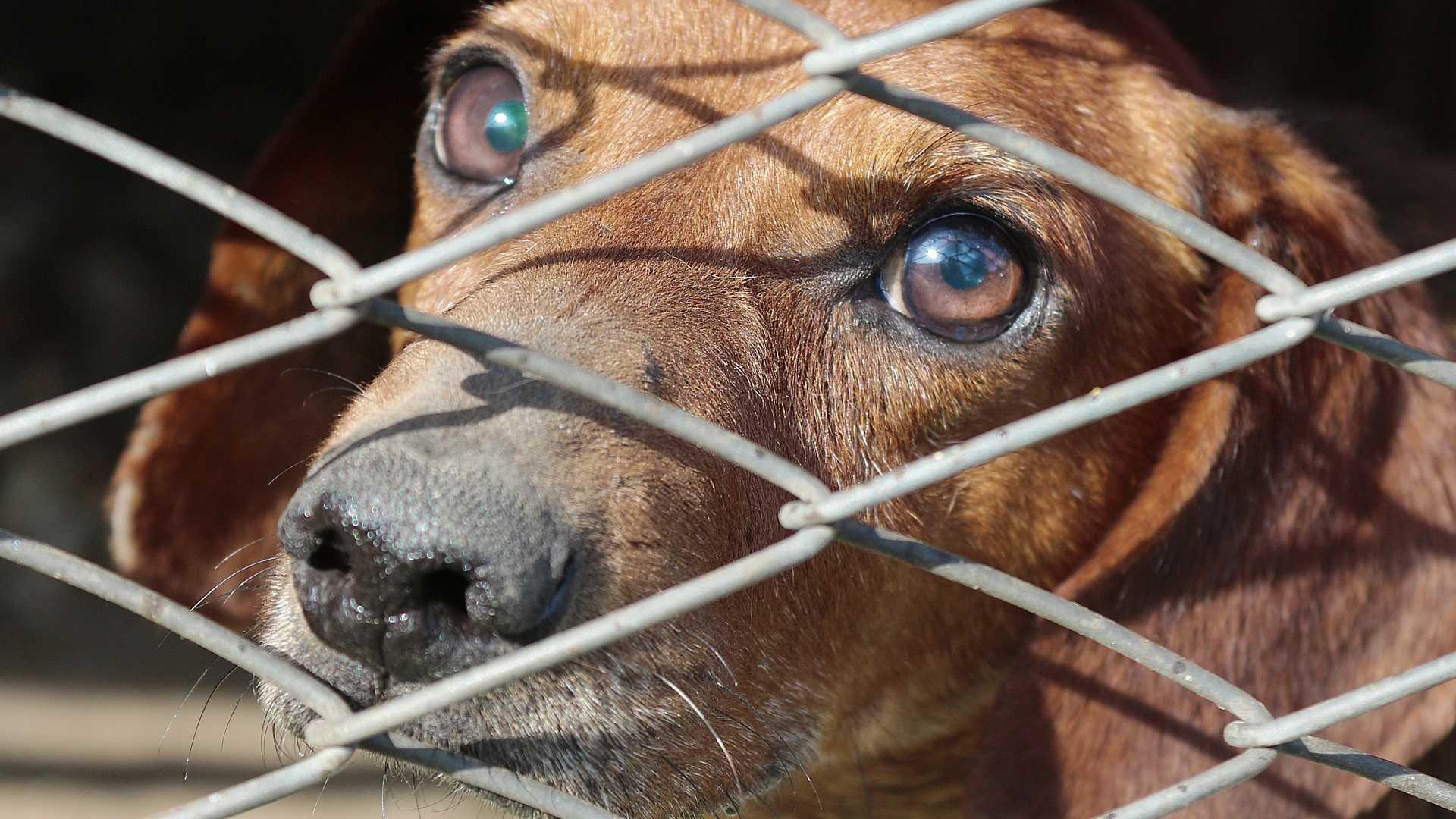 Illegale kwekerijen en handel in honden