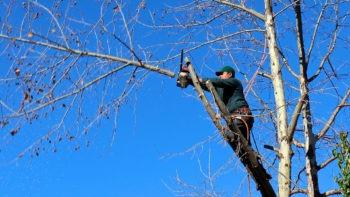 Groen hekelt houthakbeheer in Vlaanderen