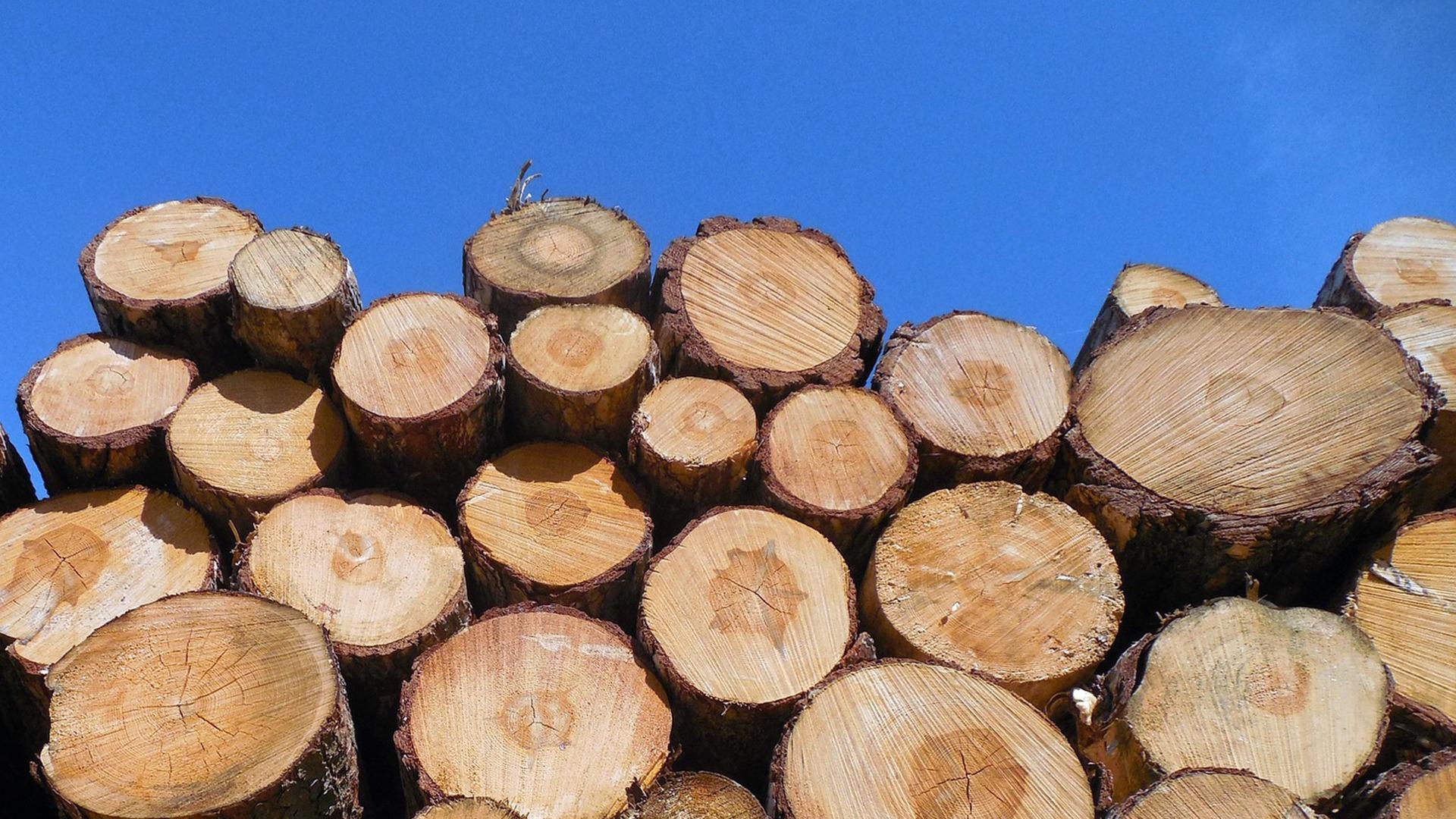 Ruim honderd hectare bomen gekapt langs snelwegen