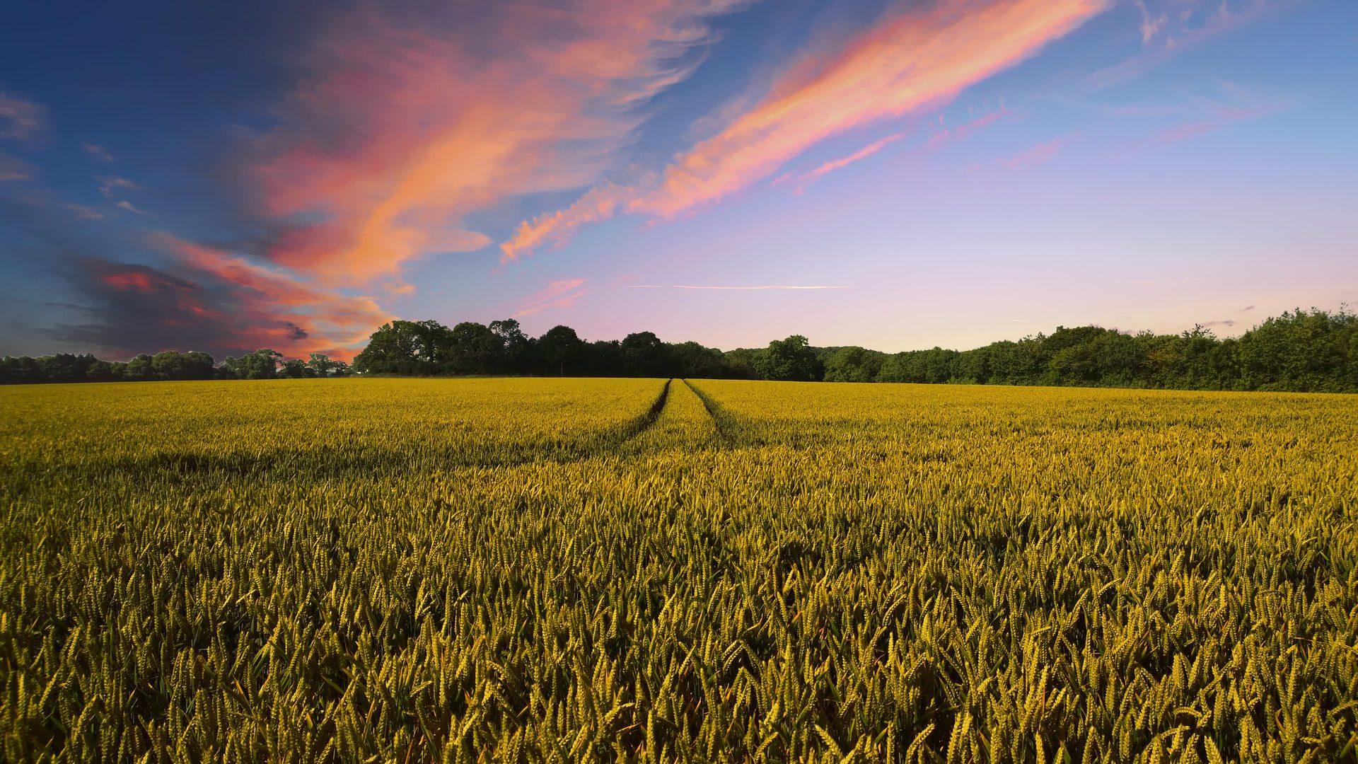 Landbouwgrond steeds duurder