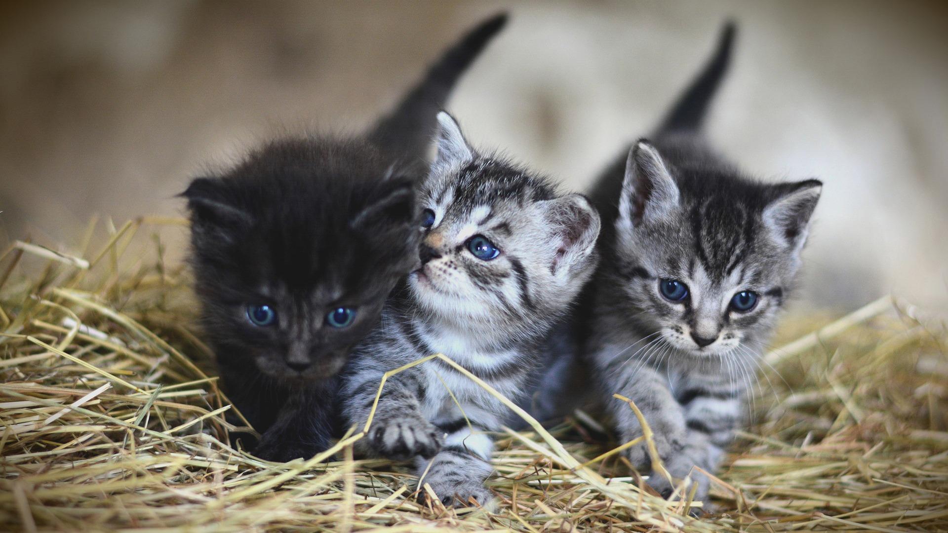 Centrale databank voor katten