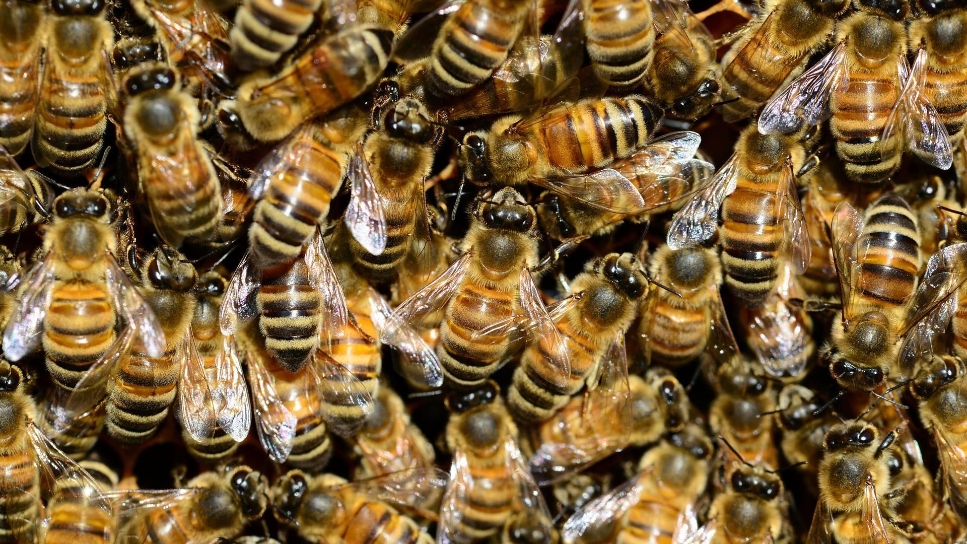 Tijdelijke toelating pesticiden