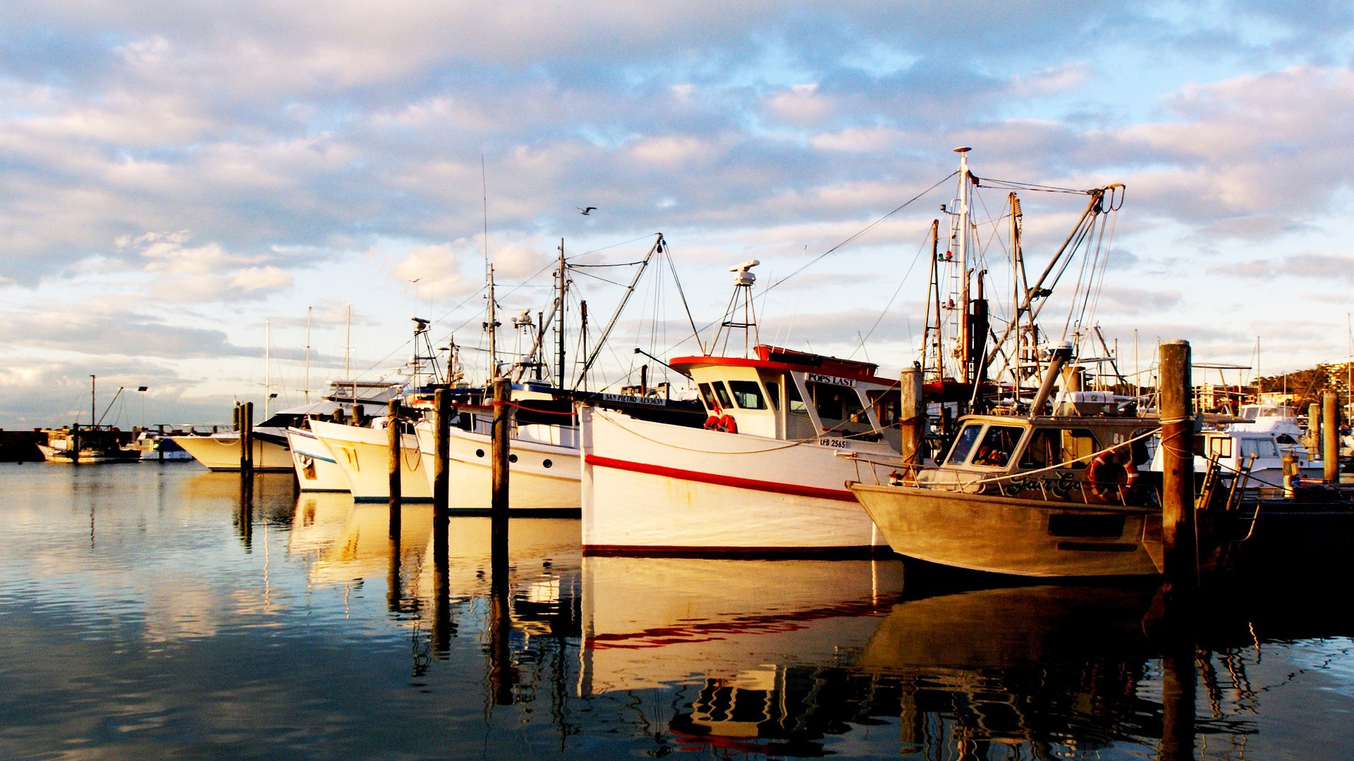 De gevolgen van een harde Brexit voor de Vlaamse visserijsector