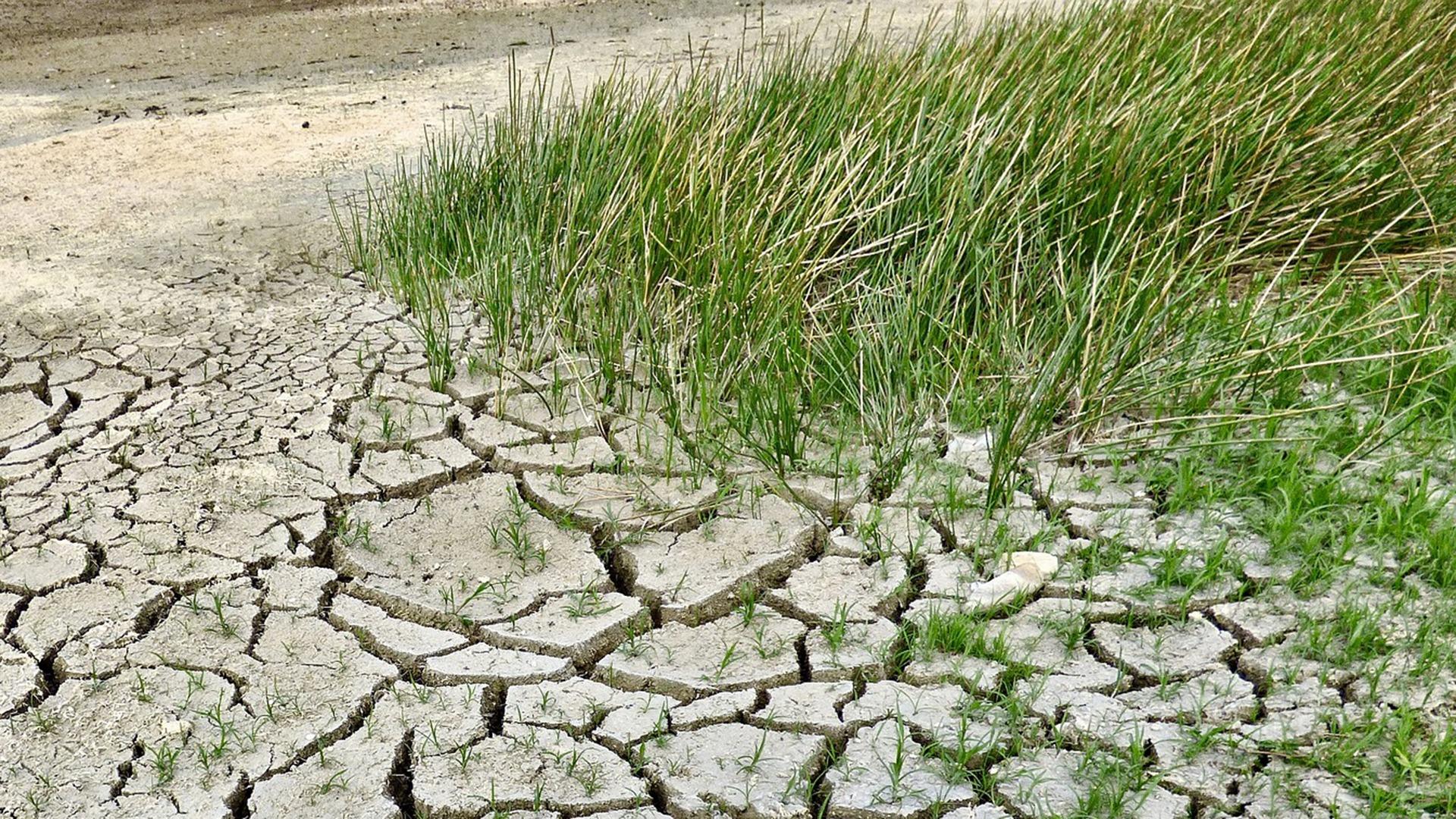 De gevolgen van de droogte voor de landbouw