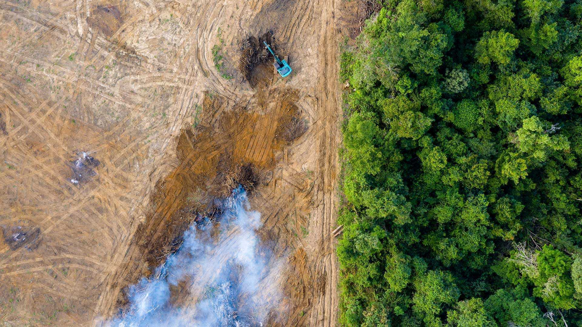 Ontbossing Amazonewoud