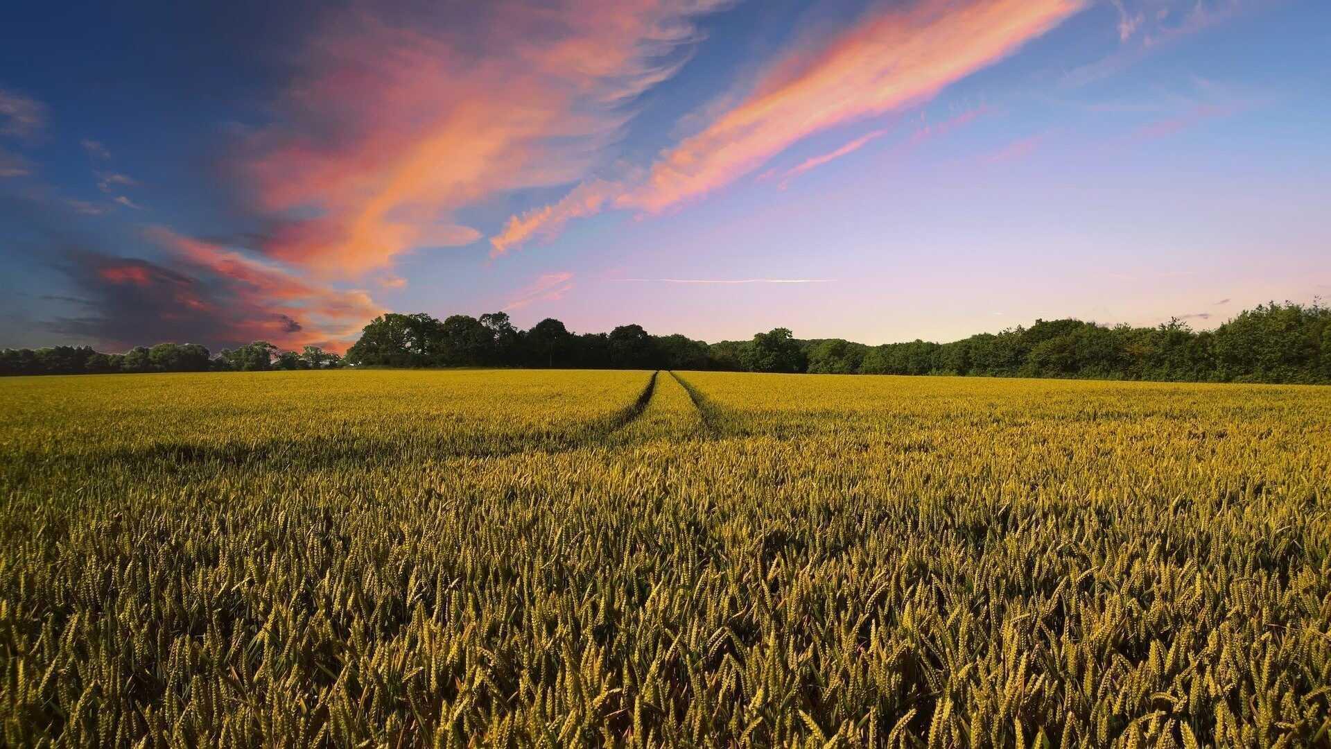 landbouwbeleid